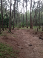 Dried creek